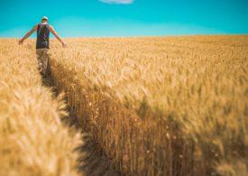Nawozy organiczne - najlepsza możliwość?